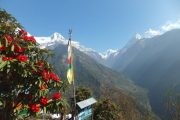 Teahouse on the Annapurna Base Camp trek with red rhododenrons in the foreground and high snowy mountains in the background