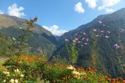 Beautiful teahouse gardens along the Poon Hill Trek