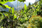 Banana trees and Marigolds on Poon Hill and Annapurna Base Camp treks