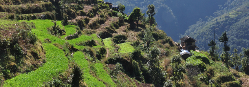15 reasons to trek in Nepal including green terraced fields for farming crops