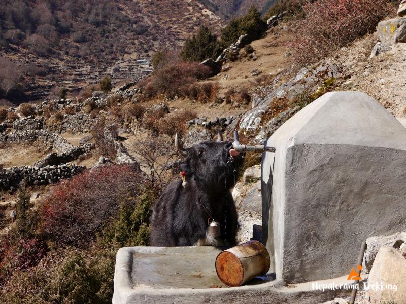 Top tips for trekking Nepal: drink lots of water!
